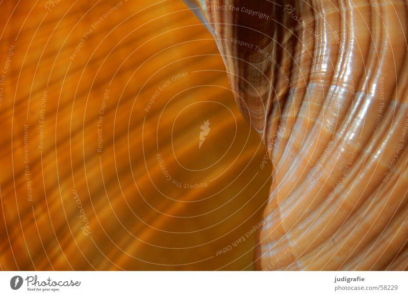 Verdreht Meer Haus schwarz Einsamkeit gelb Leben braun orange Kreis Muschel Geborgenheit harmonisch Schnecke Schalen & Schüsseln Spirale Atlantik