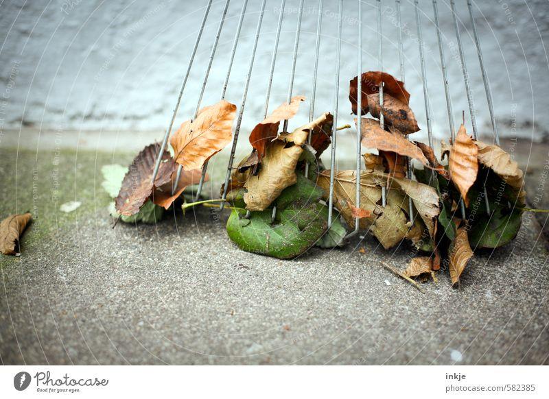 Herbstlaubreste Blatt Gefühle Sauberkeit anstrengen Gartenarbeit fleißig Kehren Ordnungsliebe Rechen