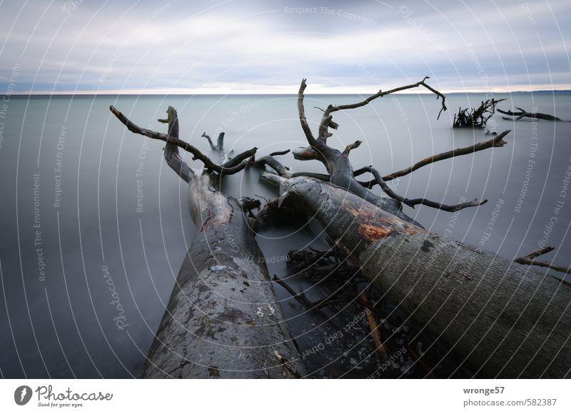 Gestürzte Riesen Natur Landschaft Pflanze Wasser Himmel Wolken Horizont Herbst Baum Küste Ostsee blau grau Wasseroberfläche Wolkenhimmel Wolkendecke Baumstamm