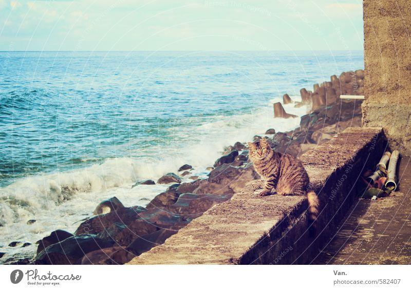 Meerkatze Landschaft Himmel Wolken Schönes Wetter Felsen Wellen Küste Mauer Wand Tier Haustier Katze 1 beobachten Neugier blau Farbfoto Gedeckte Farben