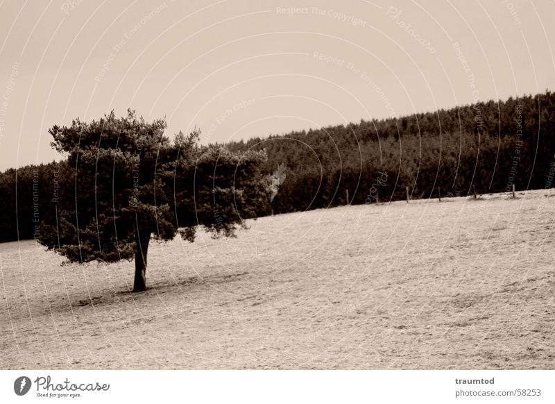 Lost Highway III Baum schwarz Einsamkeit Straße Wald dunkel Traurigkeit Feld Angst Sträucher Autobahn Sepia