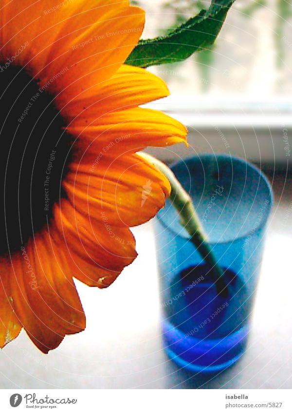 sonnenblume Blume Sonnenblume Natur