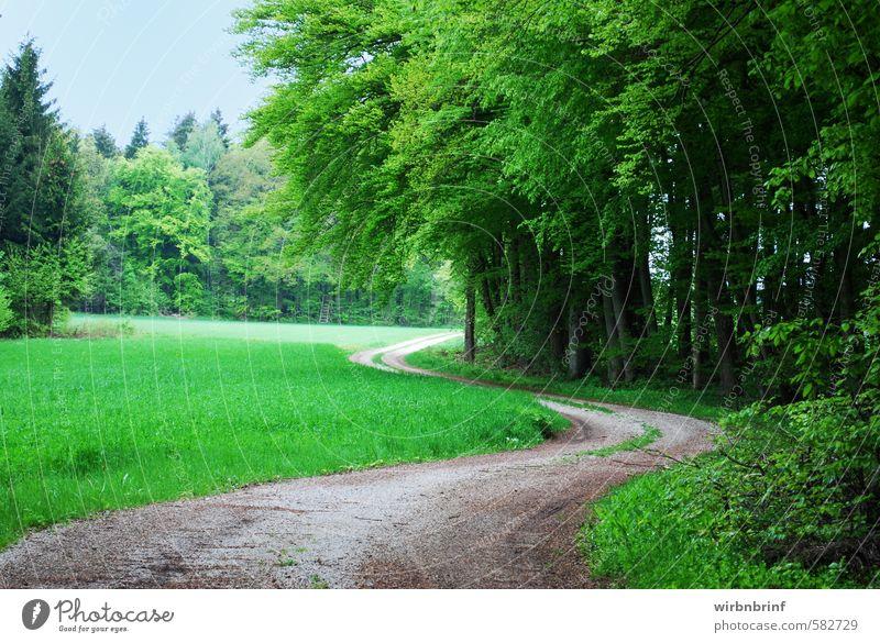 Der Waldweg..... Natur Landschaft Sommer Schönes Wetter Baum Blatt Grünpflanze Menschenleer Wege & Pfade Holz Erholung Fitness Jagd wandern Unendlichkeit grün