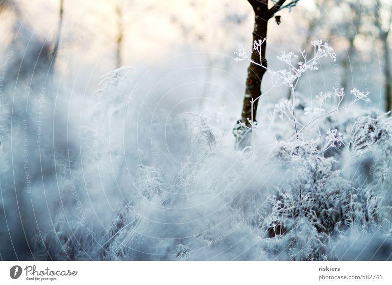 white winter Umwelt Natur Landschaft Pflanze Winter Eis Frost Schnee Wildpflanze Wiese Feld kalt weiß ruhig Idylle Farbfoto Gedeckte Farben Außenaufnahme