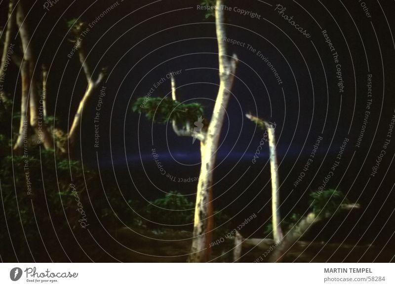 Weltuntergang Natur Baum blau Pflanze Einsamkeit dunkel kalt Traurigkeit Landschaft Umwelt Trauer Nachthimmel gruselig Ödland karg schlechtes Wetter