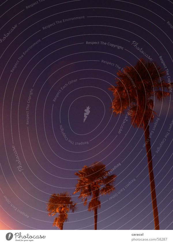 morning sky Sonnenaufgang Nacht Himmel violett rosa Palme Morgen sunrise night blau blue purple palm tree