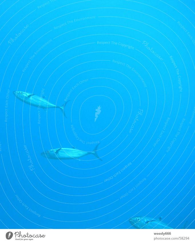 ...unter Wasser Meer See Fisch tauchen Ägypten