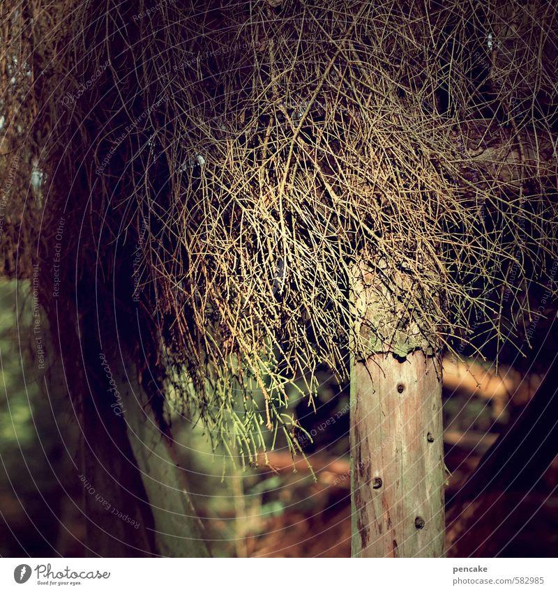 auf heu und auf stroh Natur Weihnachten & Advent Baum Winter Häusliches Leben Urelemente schlafen Schutz Zeichen Hütte Dezember Stall Herberge Holzhütte