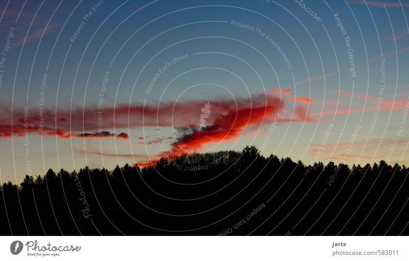 zeichen Umwelt Natur Landschaft Himmel Wolken Sonnenaufgang Sonnenuntergang Klimawandel Schönes Wetter Baum Wald außergewöhnlich bedrohlich natürlich rot