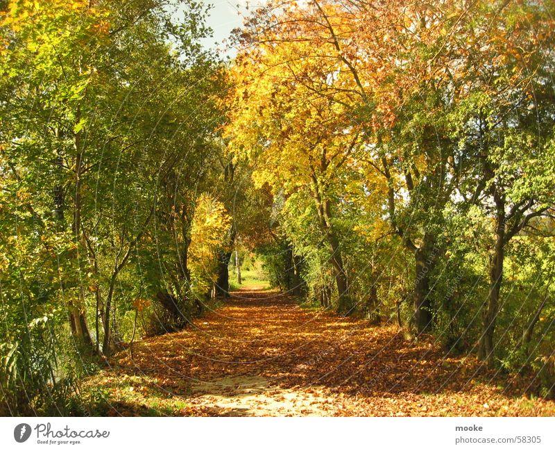 Autumn Baum rot Blatt gelb braun Spaziergang