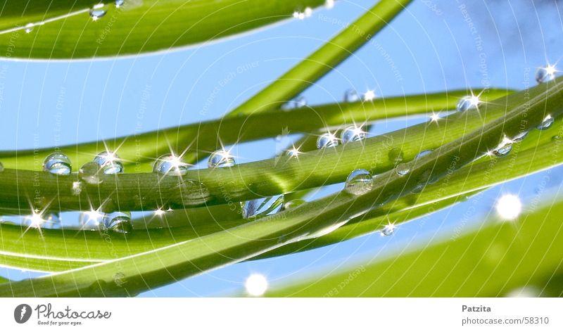 Glitzer Glitzer Gras Wiese Wassertropfen grün Sommer Frühling Halm Himmel Tau Sonne blau