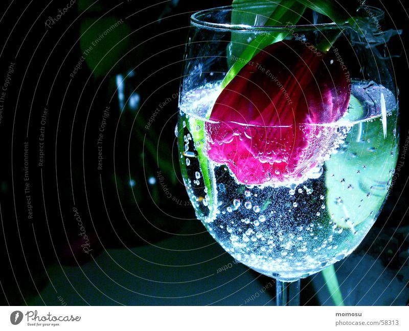 Frühlingscocktail Wasser Blatt Blüte Cocktail Tulpe Chemie Alkohol Kohlensäure