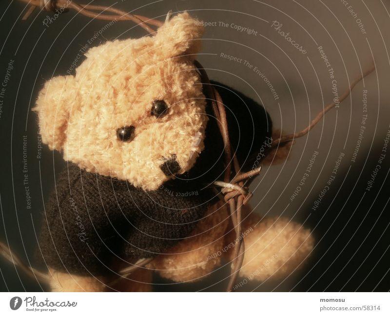 gefährliche Liebe Spielzeug Gewalt Bär Teddybär Stofftiere Missbrauch
