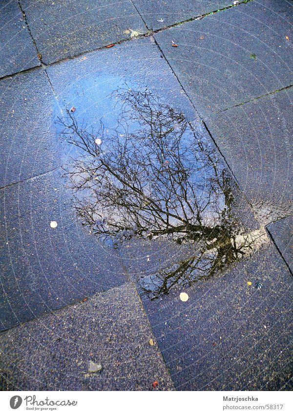 Pfützenbaum Baum Reflexion & Spiegelung Bürgersteig blau-grau Regen
