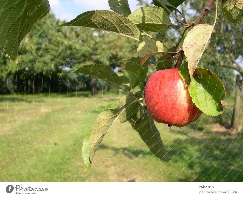 Apfel Baum Garten Frucht Apfelbaum Obstgarten