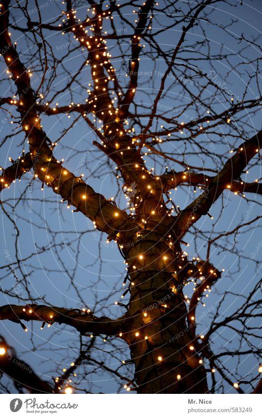 ä tännschen , please ! blau Weihnachten & Advent Baum Winter kalt Herbst Beleuchtung Feste & Feiern Stimmung Dekoration & Verzierung Ast Romantik Kitsch