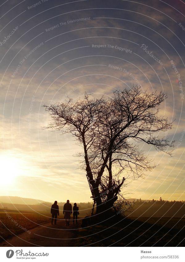 Einsamer Baum im Winter Feld Mensch Hochsitz Wolken Gegenlicht gelb Ocker kalt Ferne Herbst Dezember Nachmittag blenden trocken Spaziergang trist Aussicht blau