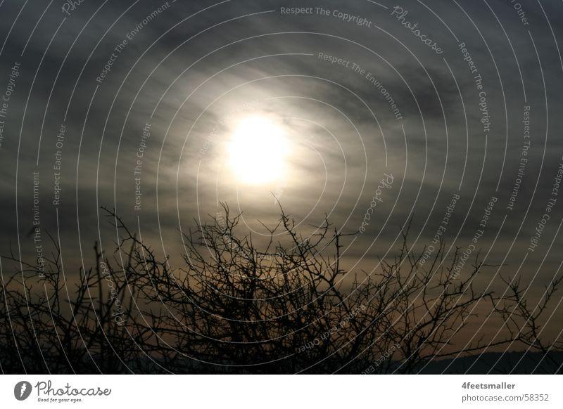 Sunny Eyes Open Sonne blau Wolken dunkel Nebel Sträucher