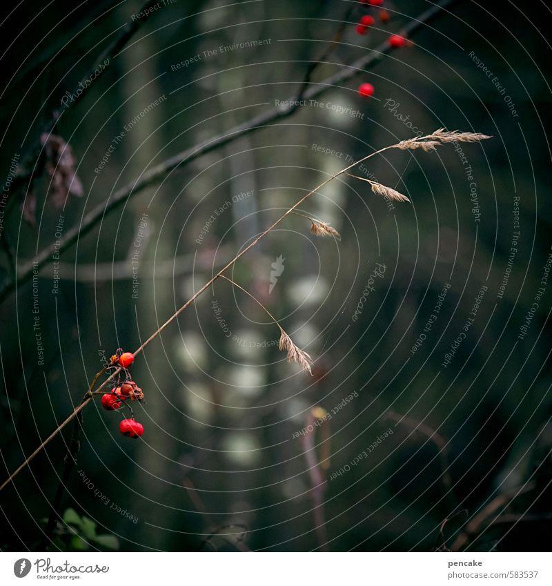 ‰ Natur Pflanze Baum Erholung rot Winter Herbst Gras Zufriedenheit Sträucher ästhetisch Pause Hoffnung bizarr Beeren Samen