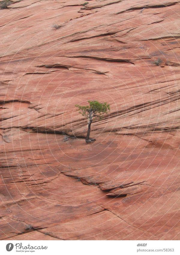 lonely Baum Einsamkeit Kraft klein stark Karriere aufsteigen Lebenslauf Felswand Durchsetzungsvermögen