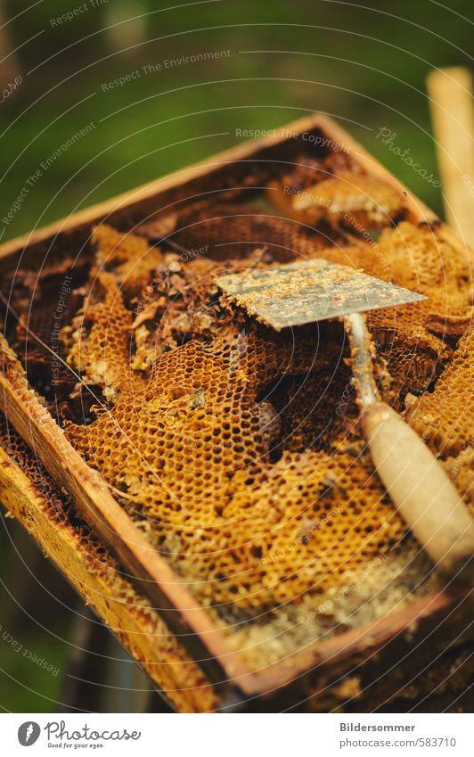 Honig Natur Umwelt Gesundheit Lebensmittel Gesundheitswesen genießen Ernährung Bioprodukte Tradition Tierzucht Gartenarbeit Produktion Bienenwaben Wachs Wabe