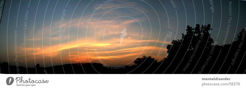 das Ende des Tages Streifen Nacht Silhouette Panorama (Aussicht) Baum planen stehen brennen Licht schwarz gelb Wellen Hügel Wolken Romantik Luft Abend Himmel