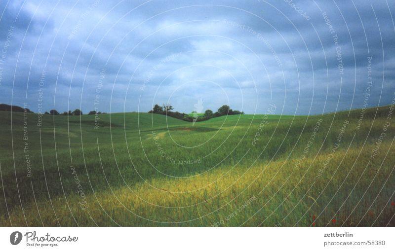 Einfach Landschaft Feld Wiese Gras Baum Wolken Horizont Sommer Rügen Ferien & Urlaub & Reisen Erholung Himmel Getreide Ferne Natur