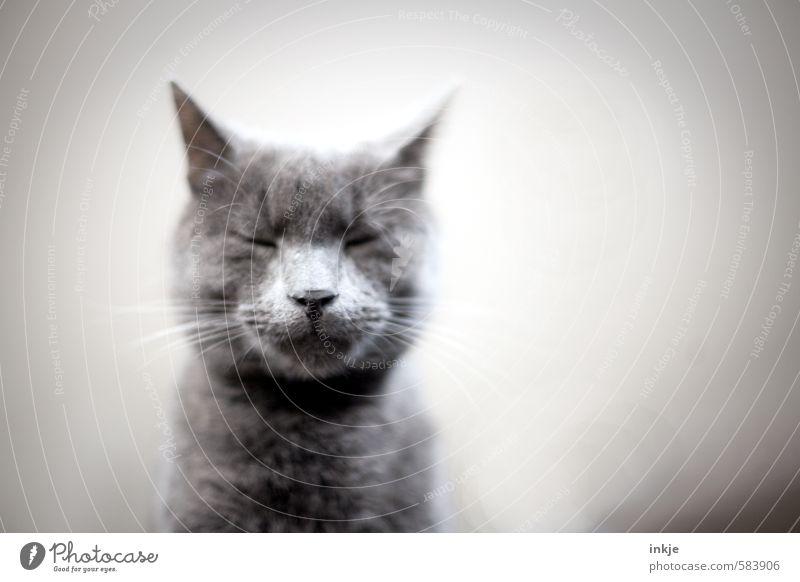 besinnlich ist,... Katze Erholung ruhig Tier Gefühle träumen Zufriedenheit Warmherzigkeit schlafen weich Pause Gelassenheit Tiergesicht Müdigkeit Haustier Hauskatze