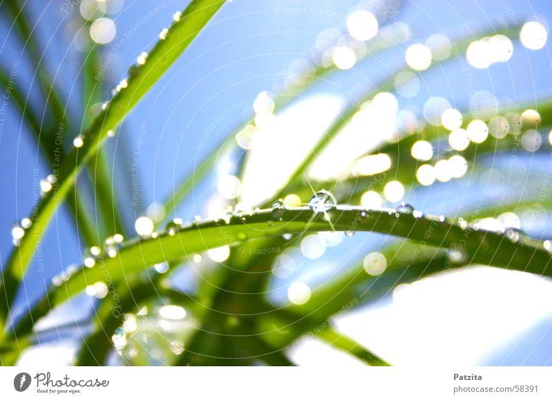 Glitzer Glitzer 2 Gras Wiese Wassertropfen Sommer Frühling grün weiß Seil Tau glänzend blau Himmel