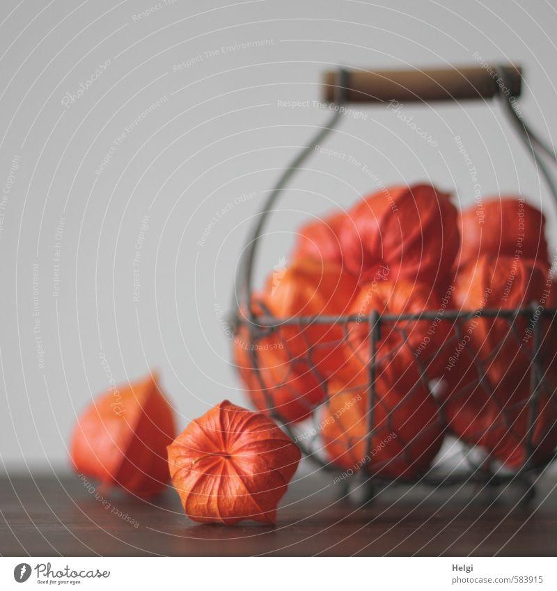 Herbstdeko... Pflanze schön Herbst natürlich grau Stimmung braun liegen orange Ordnung Häusliches Leben Frucht Dekoration & Verzierung stehen ästhetisch einzigartig
