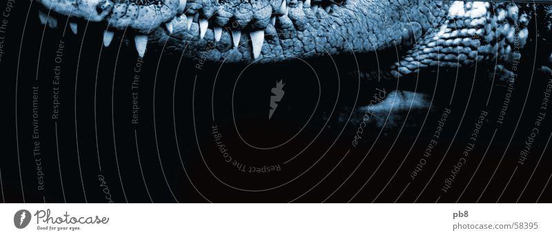 croco Krokodil bissig blau Gebiss beißen