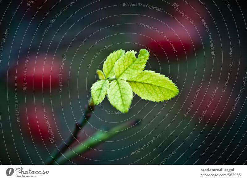 Überlebender Natur Pflanze grün rot Einsamkeit Blatt dunkel Herbst Gesundheit Freiheit Zufriedenheit Erfolg Lebensfreude einzigartig Schönes Wetter Neugier