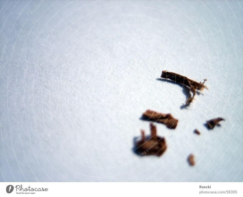 Tabak Rauchen Geruch Gift