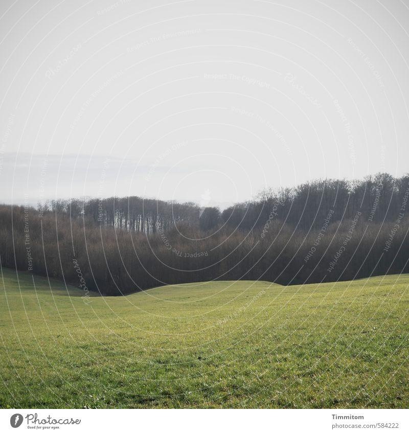 Landschaft. Umwelt Herbst Wiese Wald Hügel ästhetisch braun grau grün Gefühle Natur Kraichgau sanft Dunst Strukturen & Formen Farbfoto Gedeckte Farben