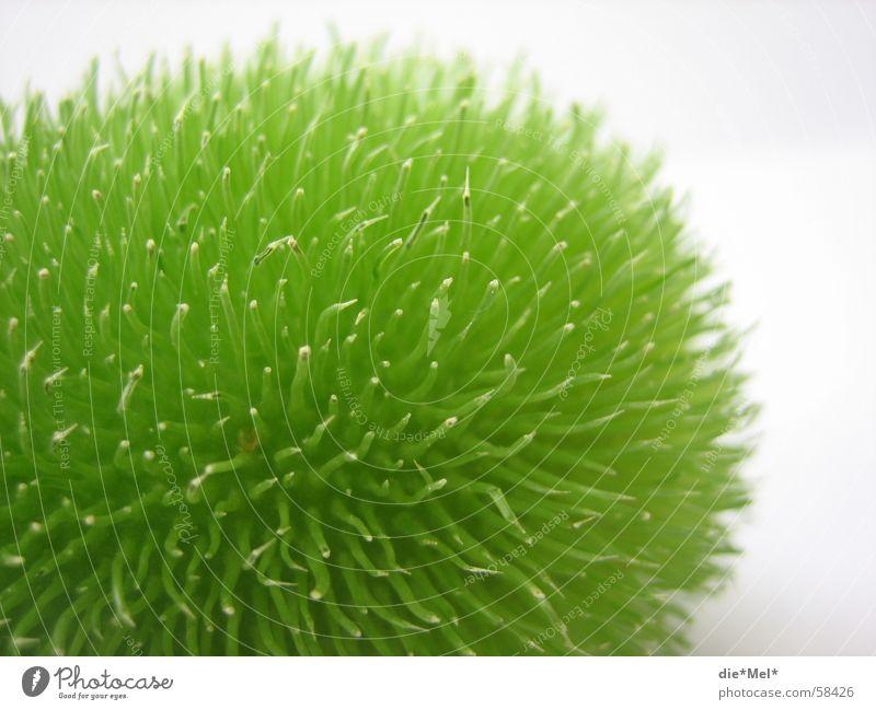Cocuma grün klein rund Dinge Gemüse Stachel Oval Gurke Tischdekoration