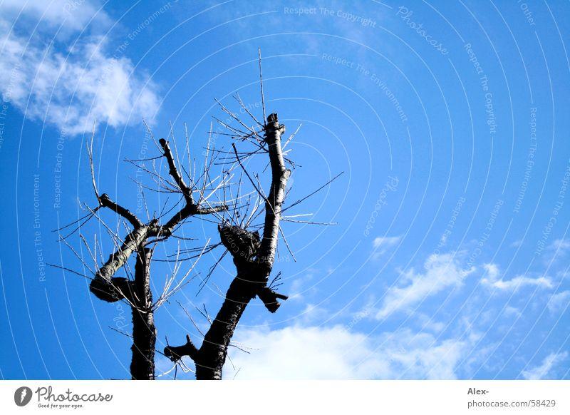 Leben nach dem Tod Baum Wachstum vernichten zerstören Pflanze Wolken Luft Baumrinde Natur alt Himmel Erde Ast Baumstamm