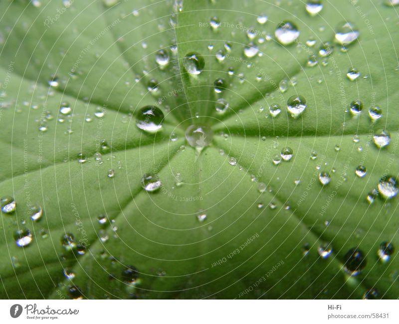 Nasses Blatt Natur Wasser nass Wassertropfen Sträucher Palme feucht