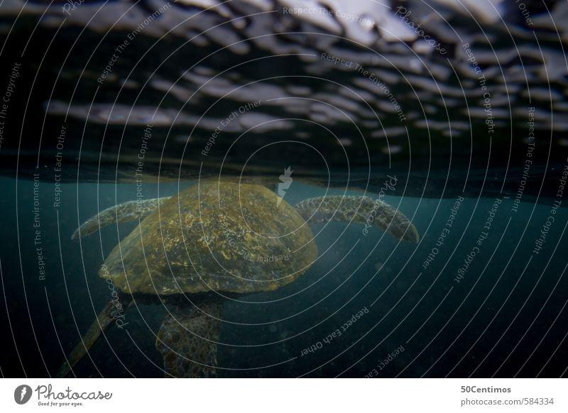 Wasserschildkröte an der Wasseroberfläche Ferien & Urlaub & Reisen Tourismus Ausflug Abenteuer Ferne Sommerurlaub Strand Meer tauchen Umwelt Natur