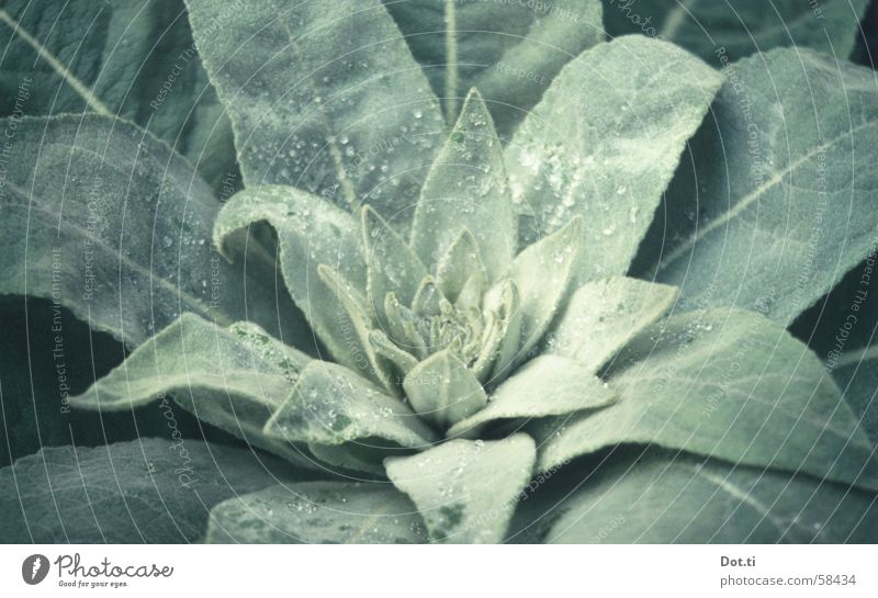 Morgentau Garten Seil Natur Pflanze Wassertropfen Blatt Grünpflanze Park Wachstum grün hellgrün samtig Botanik Reifezeit Blütenknospen Tau pelzig grow drop