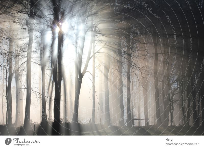 Lichtstrahlen | Wintermorgen Natur weiß Pflanze Baum Landschaft ruhig kalt Wald Umwelt grau natürlich außergewöhnlich braun Stimmung Eis