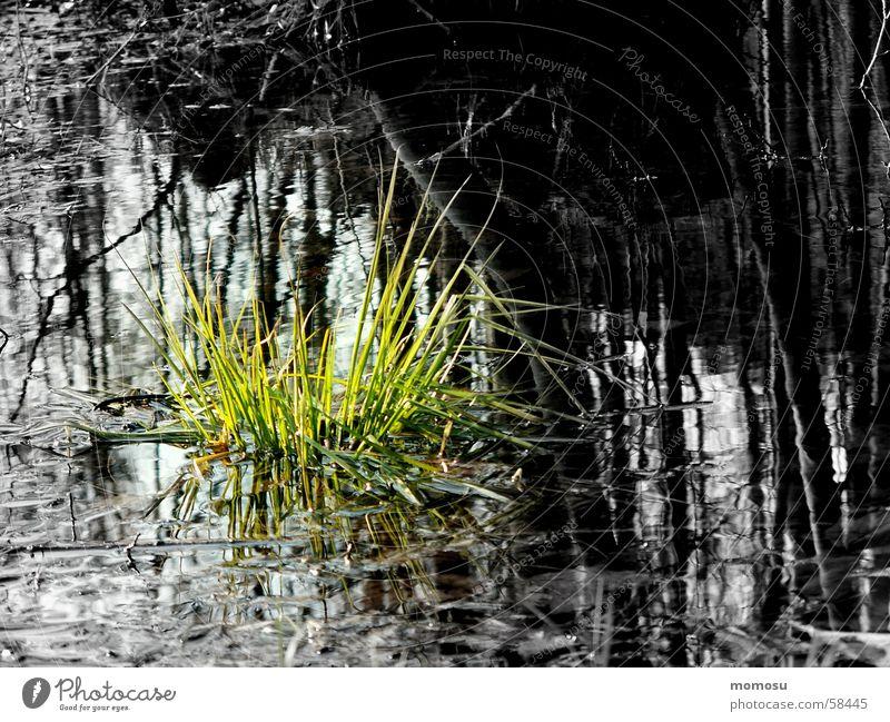 ...wenn Hoffnung wächst Wasser Gras Überschwemmung