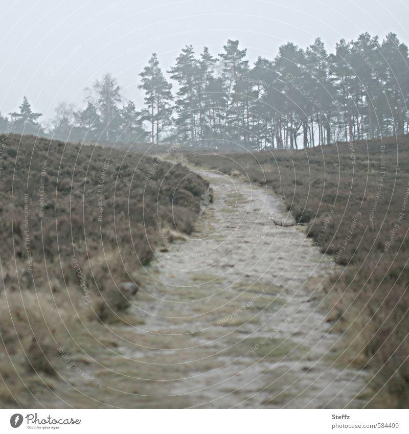 Gehmeditation in der Heide nordisch heimisch nordische Landschaft nordische Natur nordische Wildpflanzen nordische Romantik Heidestille Nebel Stille Ruhe