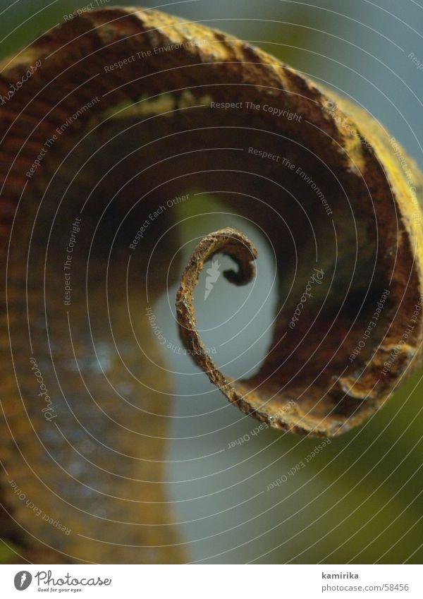 schienenspan Natur Blume Pflanze braun Metall Gleise Rost Eisen Spirale Hobel