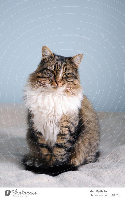 Katze Tier Haustier Tiergesicht Pfote 1 Coolness authentisch einfach elegant fantastisch Ferne frei Farbfoto Innenaufnahme Nahaufnahme Detailaufnahme