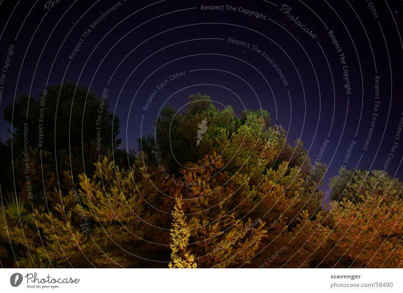 Waldbeleuchtung Himmel Natur grün Baum Pflanze rot schwarz dunkel hell Beleuchtung Horizont Sträucher Ast Weltall Hecke