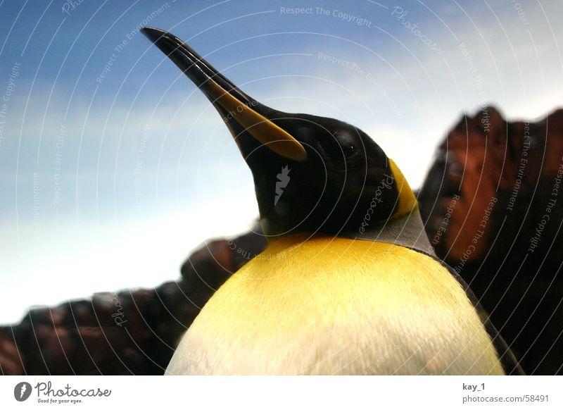 Königspinguin Königspinguine Pinguin penguin