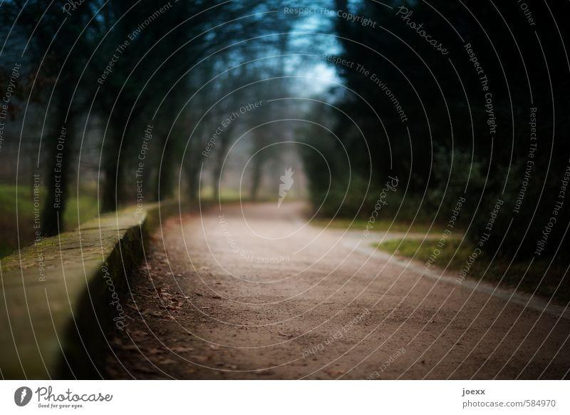 Entscheidung Schönes Wetter Nebel Baum Park Wald Mauer Wand Verkehrswege Wege & Pfade lang blau braun grün Vorsicht ruhig Traurigkeit Sehnsucht Idylle kalt