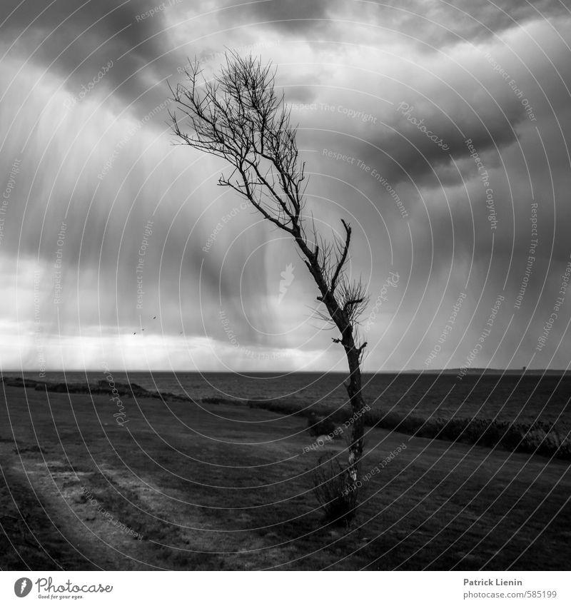 Gegen den Wind Natur Wasser Pflanze Baum Einsamkeit Landschaft Wolken dunkel Umwelt Herbst Küste grau Luft Wetter Regen Wellen
