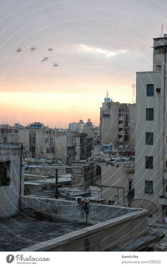 alexandria Stadt Ägypten Sonnenaufgang Afrika Alexandria egypt Ferien & Urlaub & Reisen sunrise vogelm vögel birds Morgen muezzin