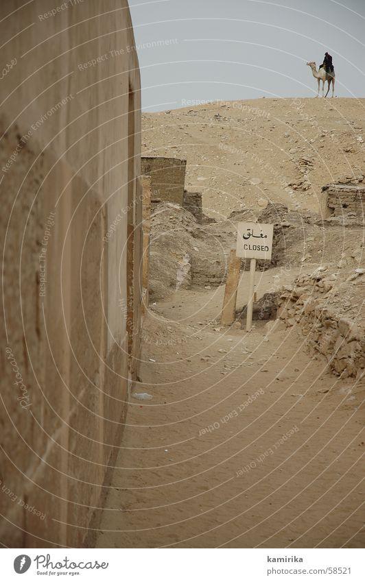 sakkara Ägypten Afrika Wächter Kamel Dromedar Pyramide exit Wüste